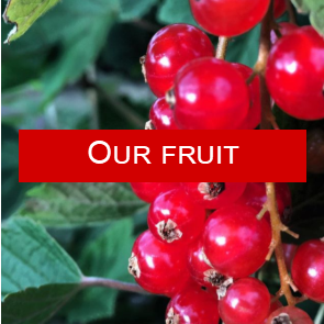 our fruit