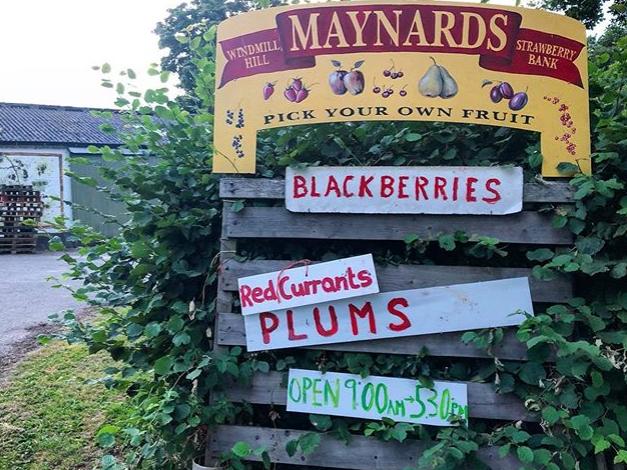 Maynards fruit farm sign