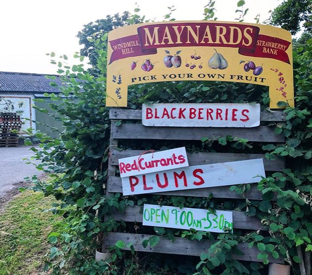 Maynards fruit farm sign